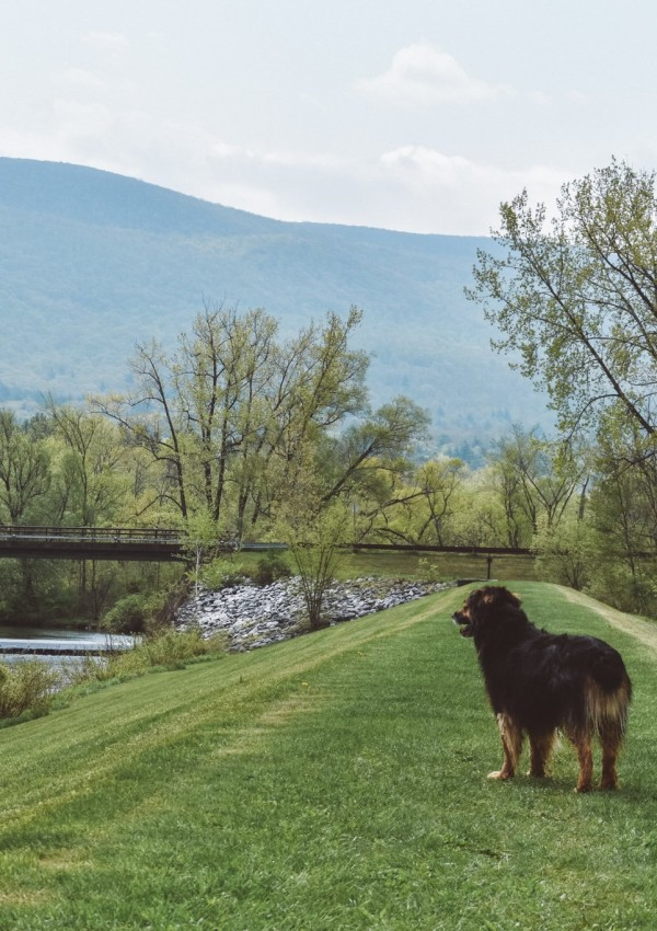 Your Dog Will Bark for the Berkshires