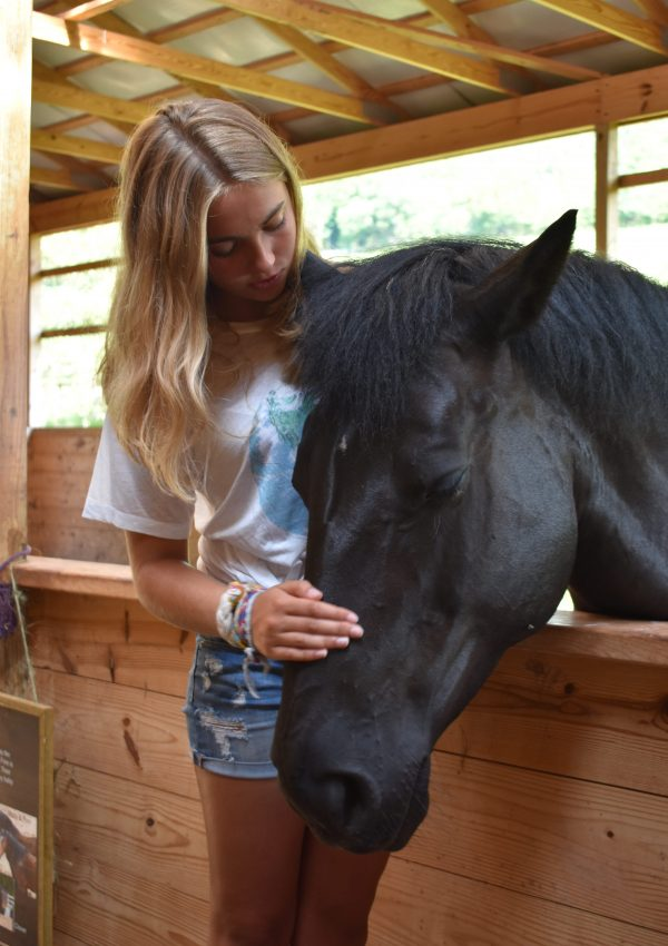Visiting Rosemary Farm- a Sanctuary for Horses