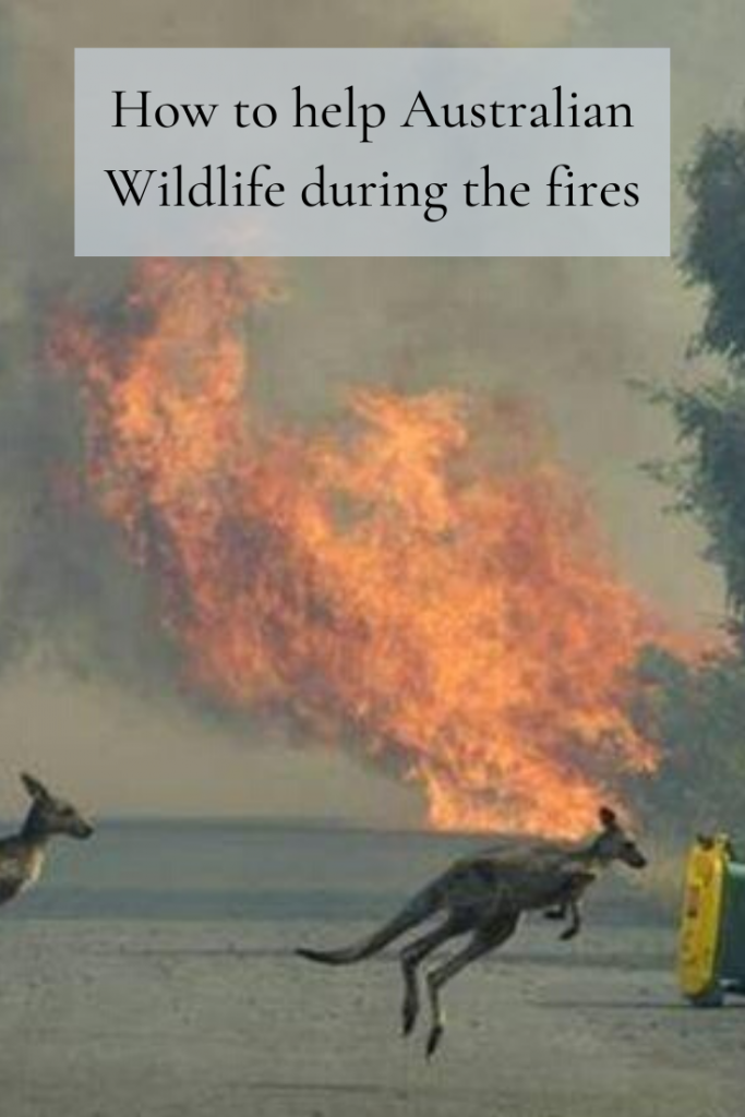 How to help Australian Wildlife during the fires