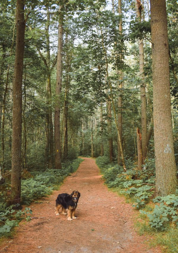 The best places to hike with your dog near Boston