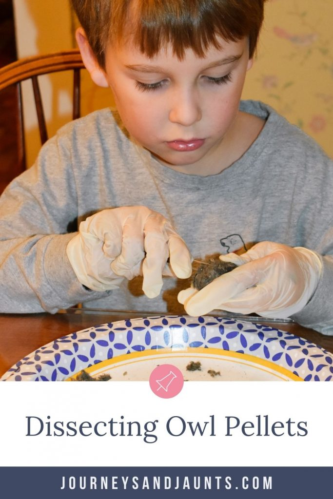 owl pellets dissection